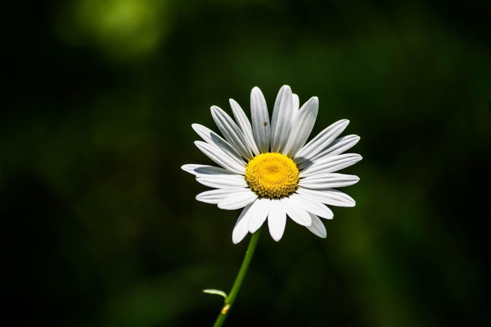 Daisy as an example of a sermon outline